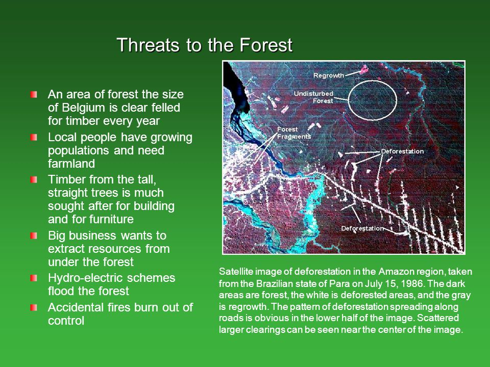 Threats to the Forest An area of forest the size of Belgium is clear felled for timber every year.