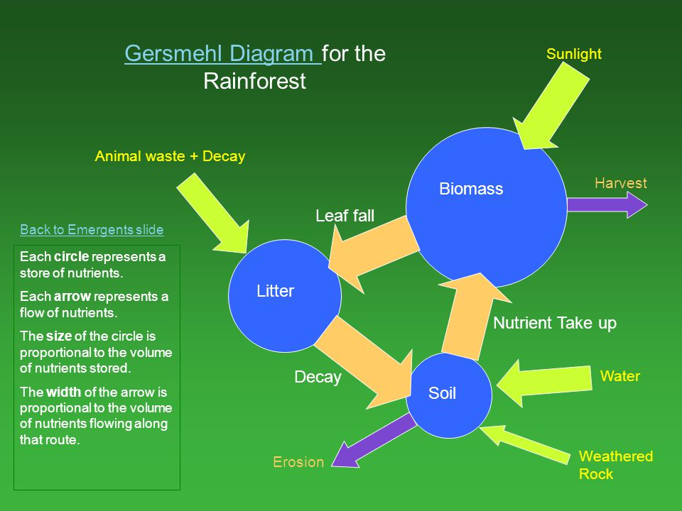 Gersmehl Diagram for the Rainforest