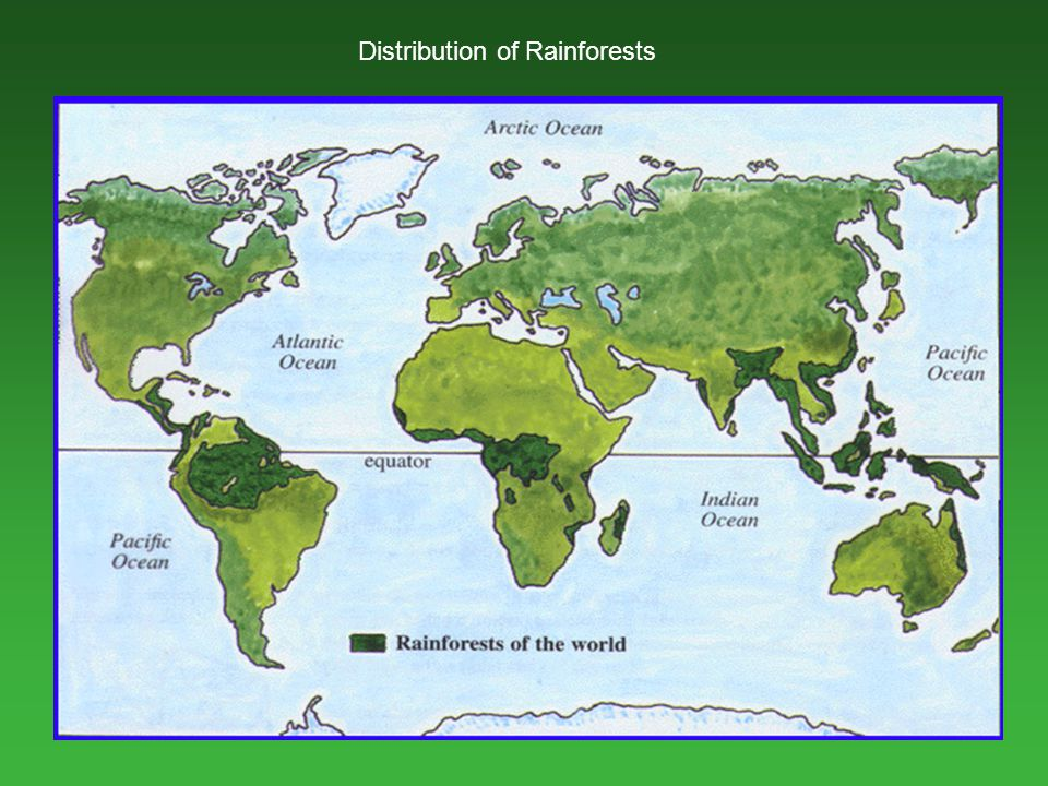Distribution of Rainforests