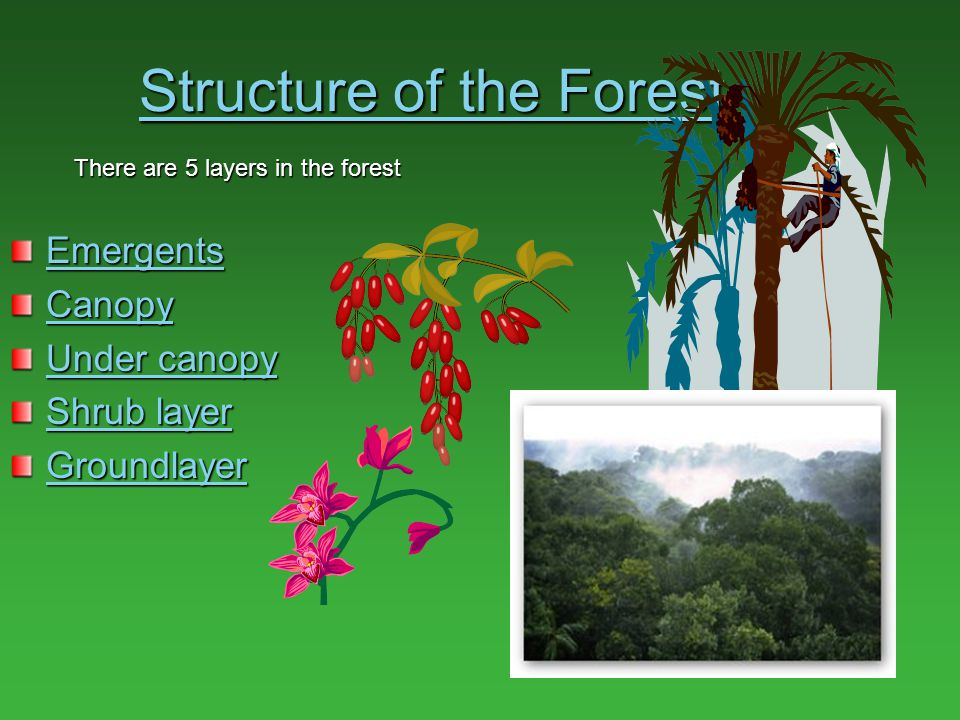 Structure of the Forest
