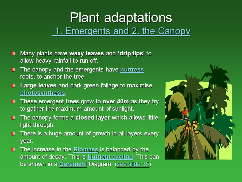 Adaptive Features of Plants