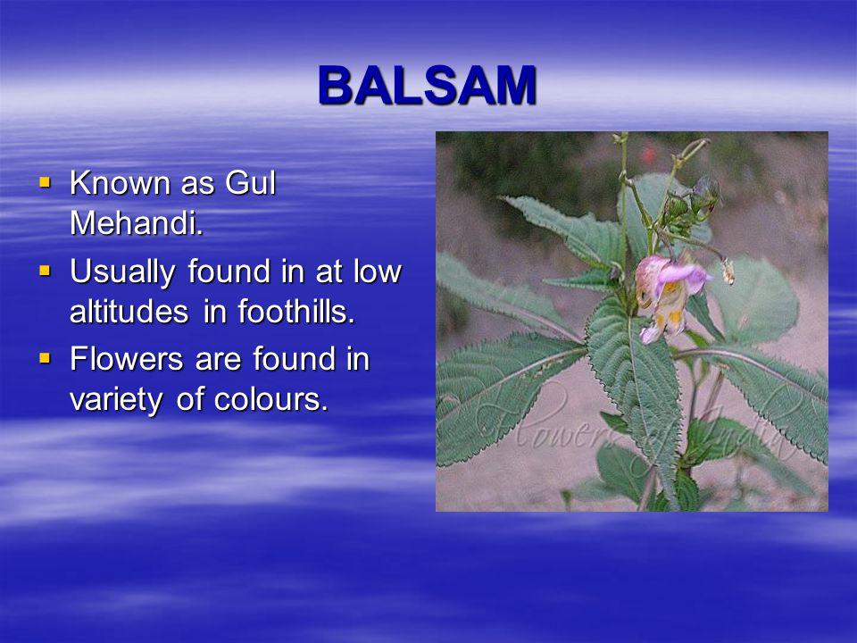 BALSAM Known as Gul Mehandi.