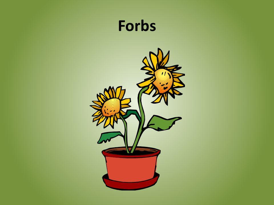 Forbs