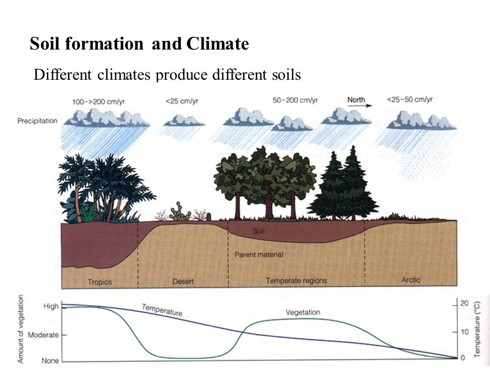 Soil formation and Climate