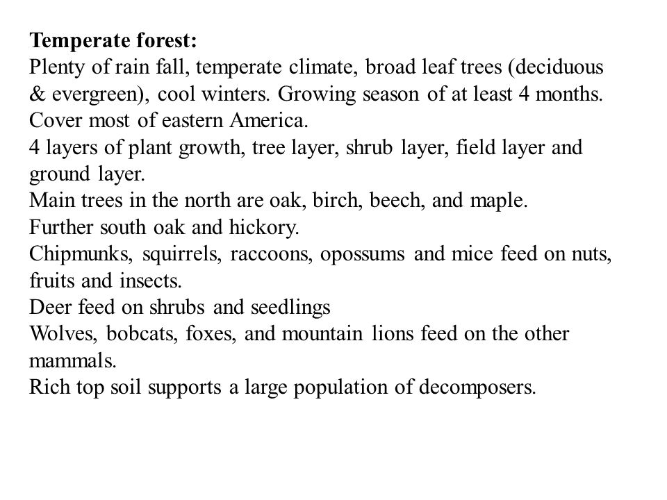 Temperate forest: