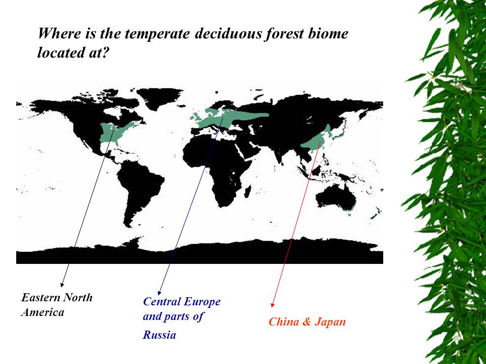 Where is the temperate deciduous forest biome located at