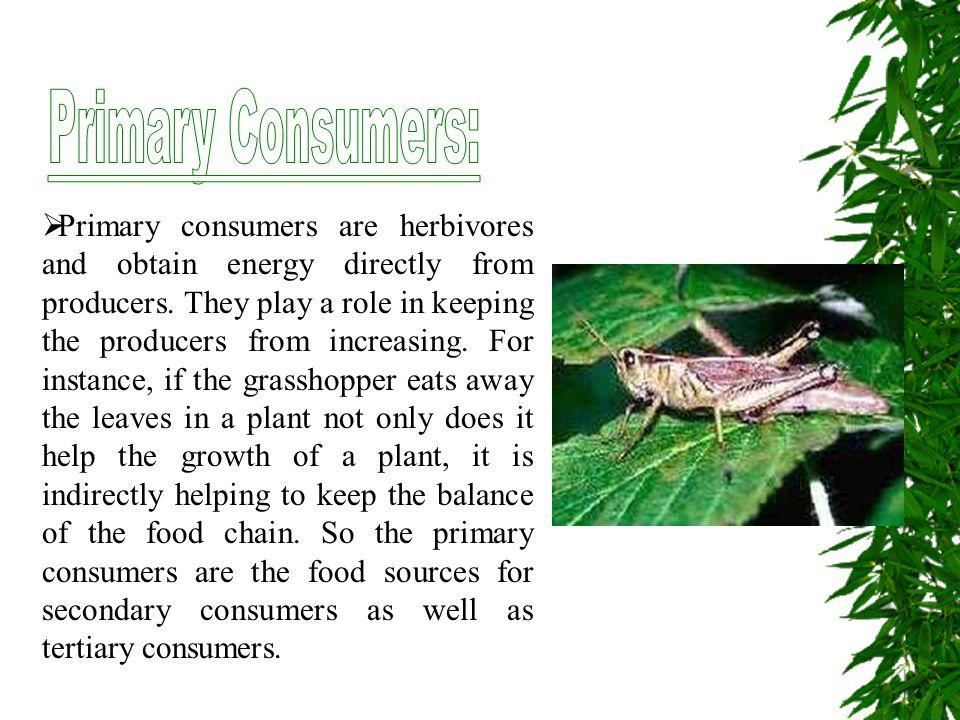 Primary Consumers: