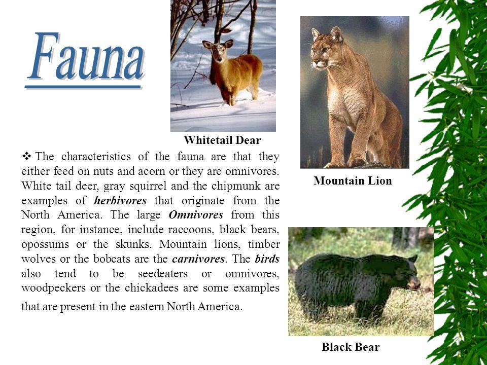 Fauna Whitetail Dear.