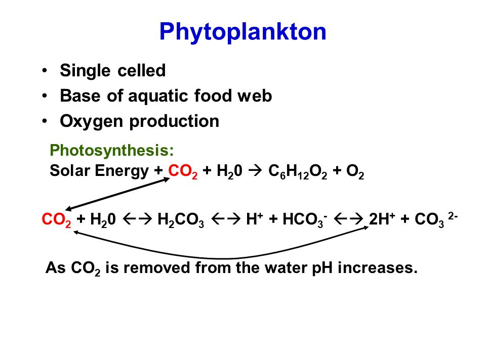 Phytoplankton Single celled Base of aquatic food web Oxygen production