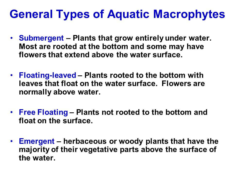 General Types of Aquatic Macrophytes