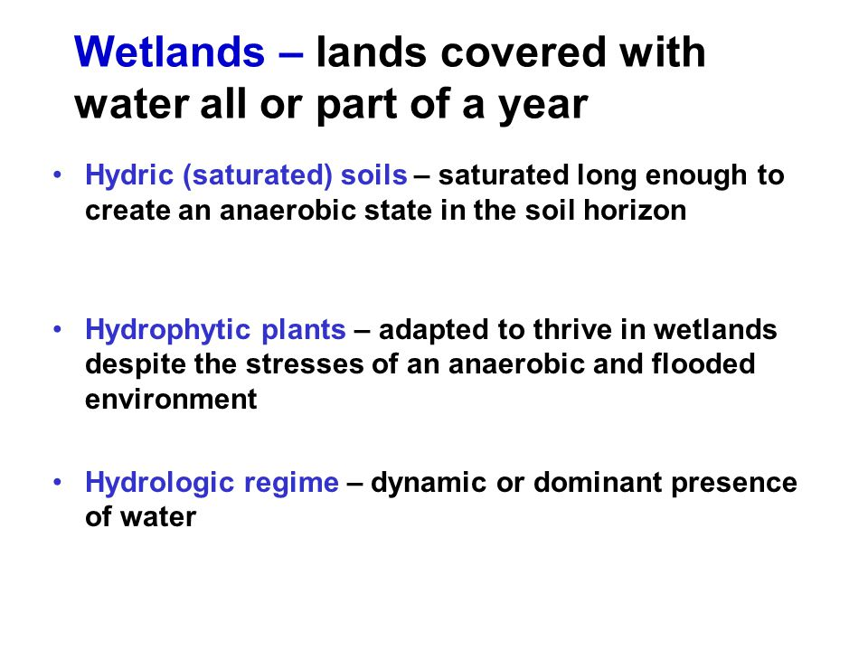 Wetlands – lands covered with water all or part of a year