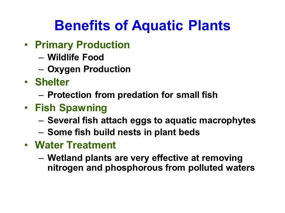 Benefits of Aquatic Plants