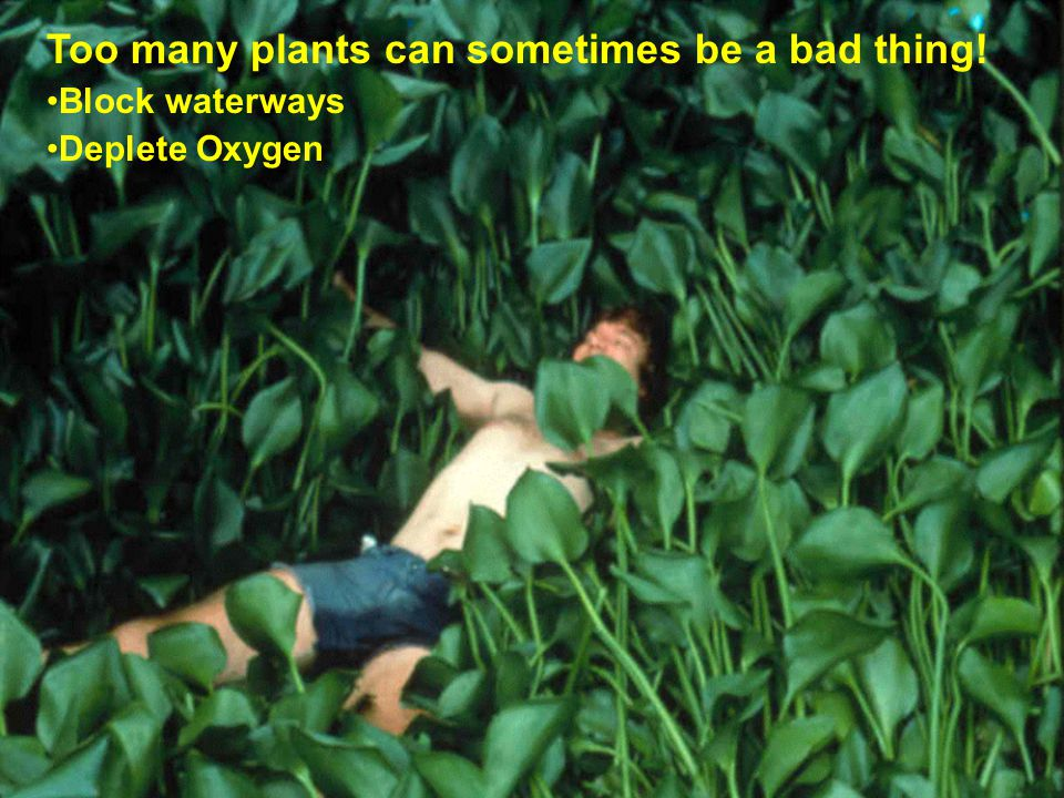 Too many plants can sometimes be a bad thing!