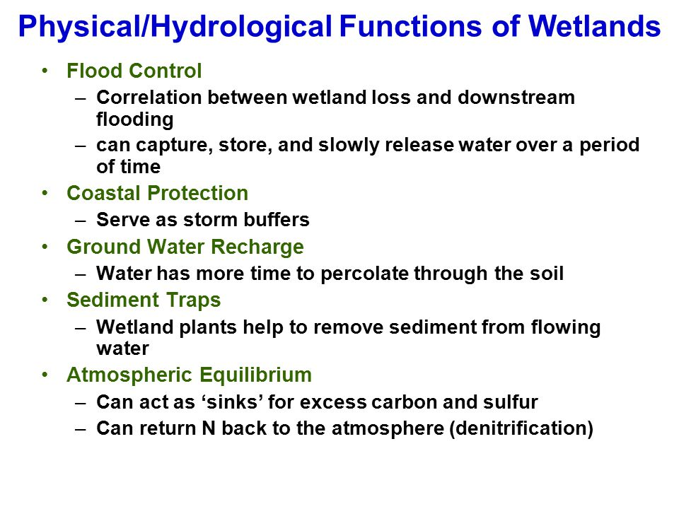 Physical/Hydrological Functions of Wetlands