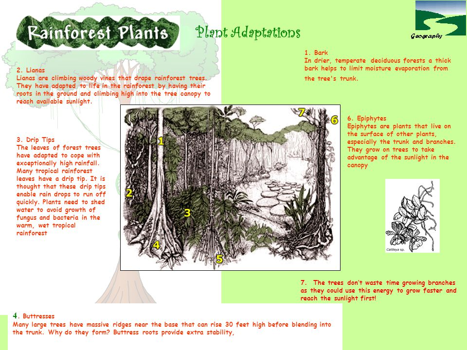 3) General features of tropical plants