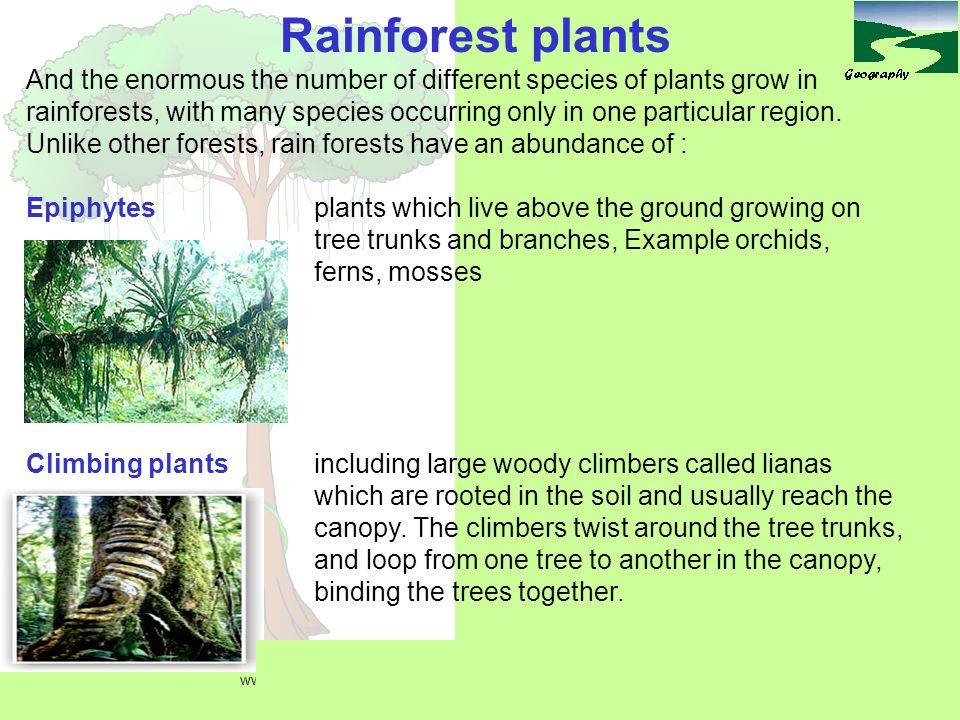 And the enormous the number of different species of plants grow in