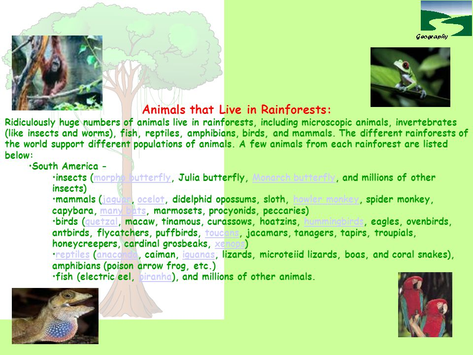 Animals that Live in Rainforests: