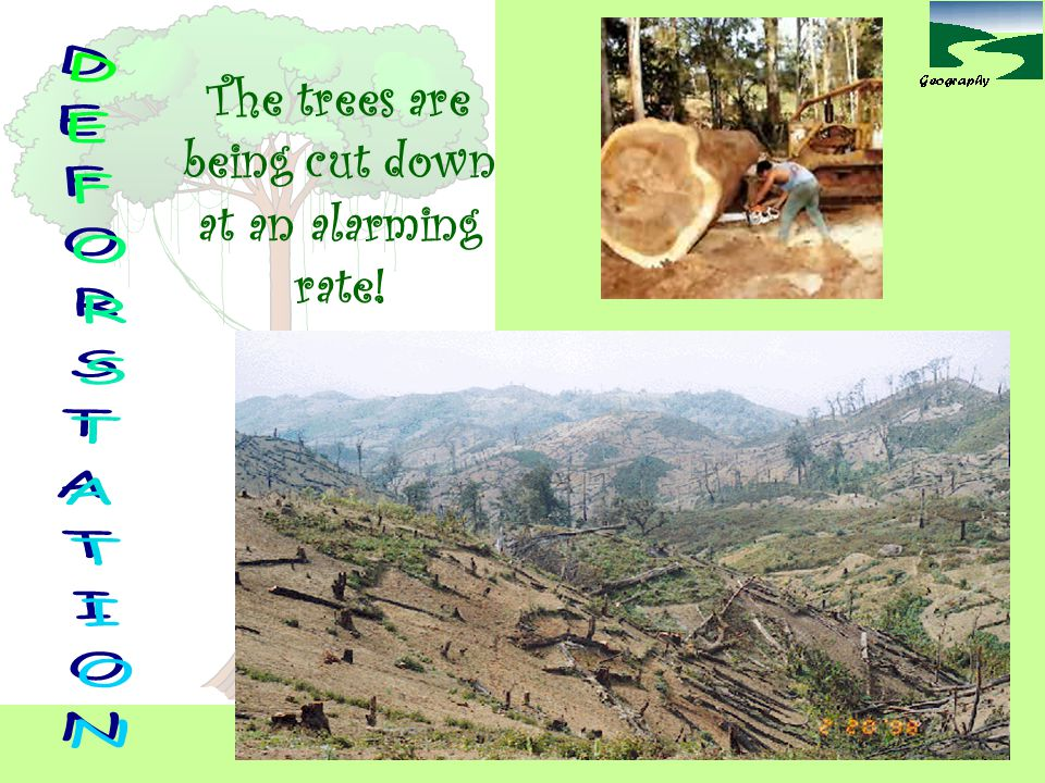 The trees are being cut down at an alarming rate!