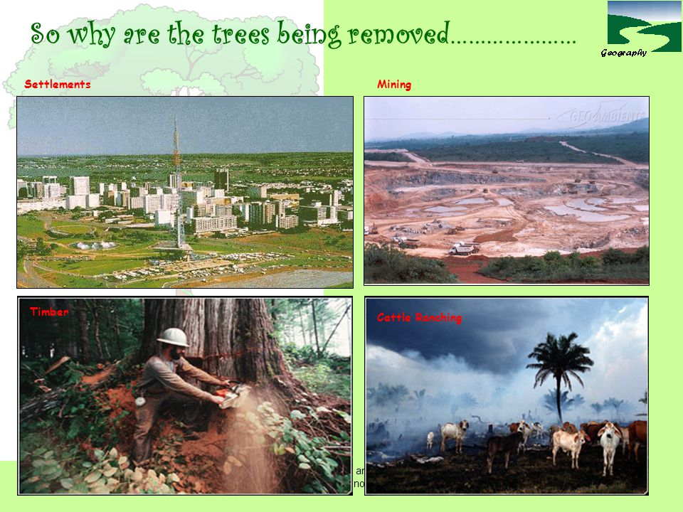So why are the trees being removed…………………
