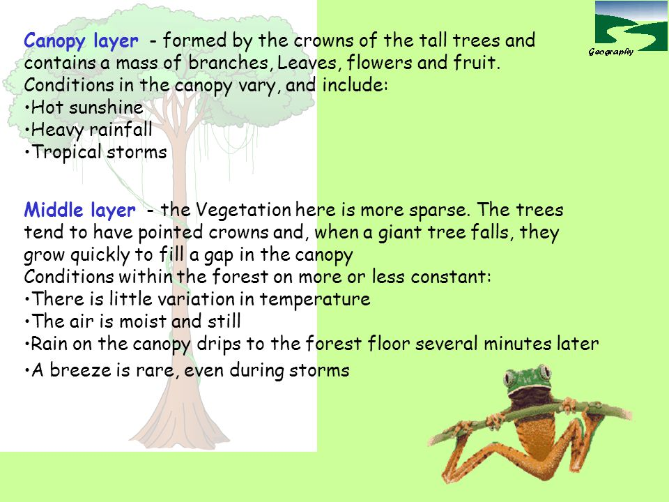 Canopy layer - formed by the crowns of the tall trees and