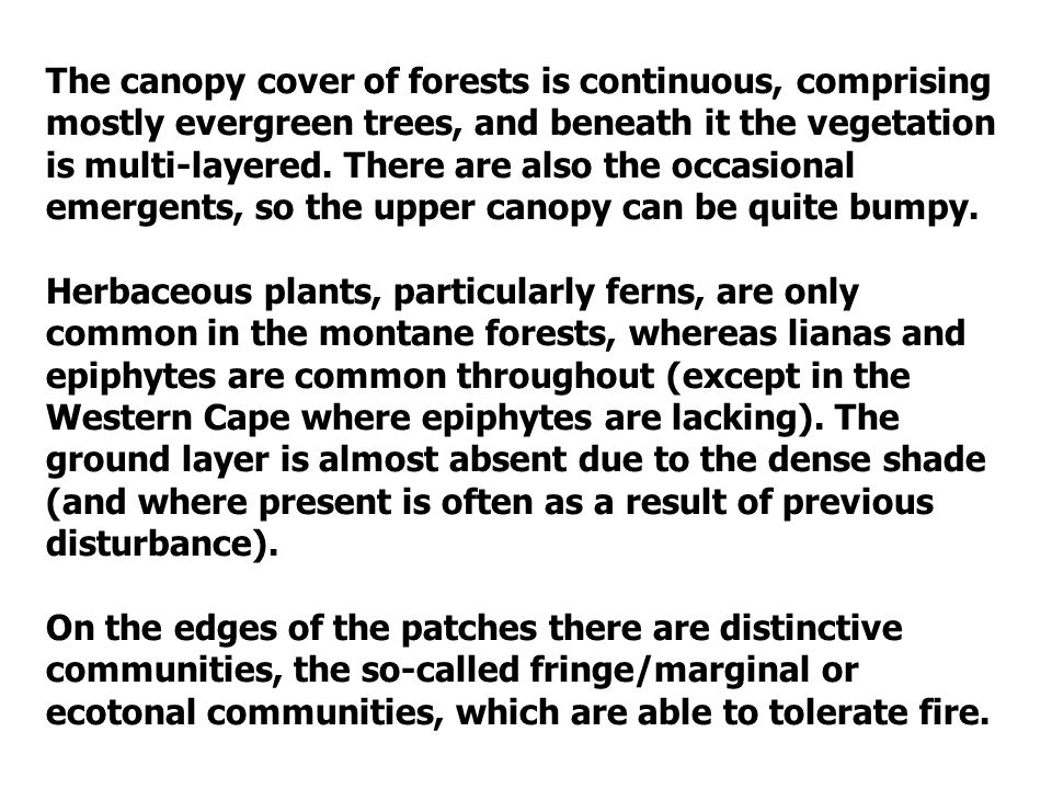 The canopy cover of forests is continuous, comprising mostly evergreen trees, and beneath it the vegetation is multi-layered. There are also the occasional emergents, so the upper canopy can be quite bumpy.