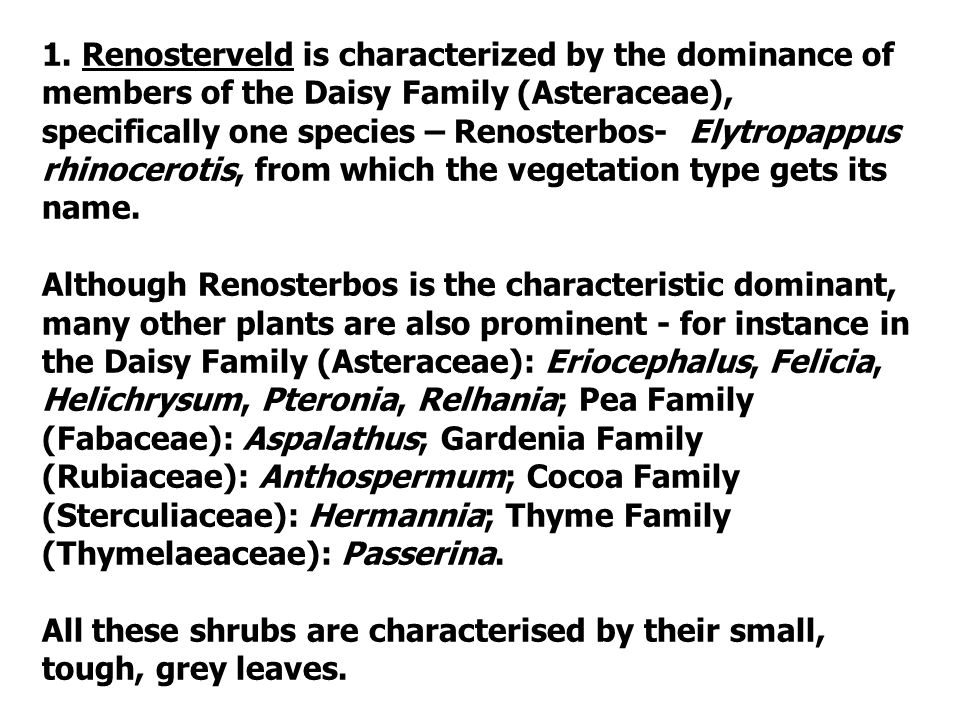 1. Renosterveld is characterized by the dominance of members of the Daisy Family (Asteraceae), specifically one species – Renosterbos- Elytropappus rhinocerotis, from which the vegetation type gets its name.