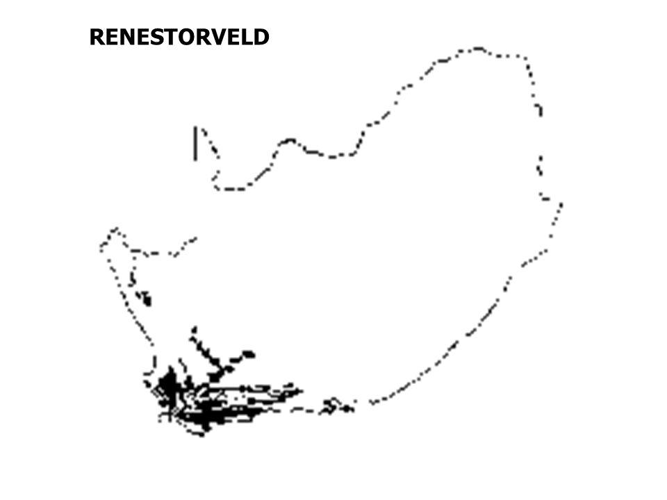 RENESTORVELD