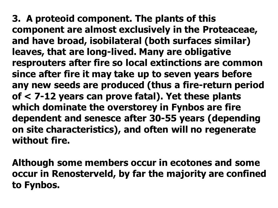 3. A proteoid component. The plants of this component are almost exclusively in the Proteaceae, and have broad, isobilateral (both surfaces similar) leaves, that are long-lived. Many are obligative resprouters after fire so local extinctions are common since after fire it may take up to seven years before any new seeds are produced (thus a fire-return period of < 7-12 years can prove fatal). Yet these plants which dominate the overstorey in Fynbos are fire dependent and senesce after 30-55 years (depending on site characteristics), and often will no regenerate without fire.