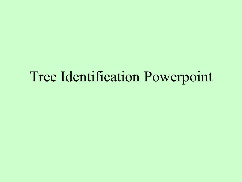 Tree Identification Powerpoint