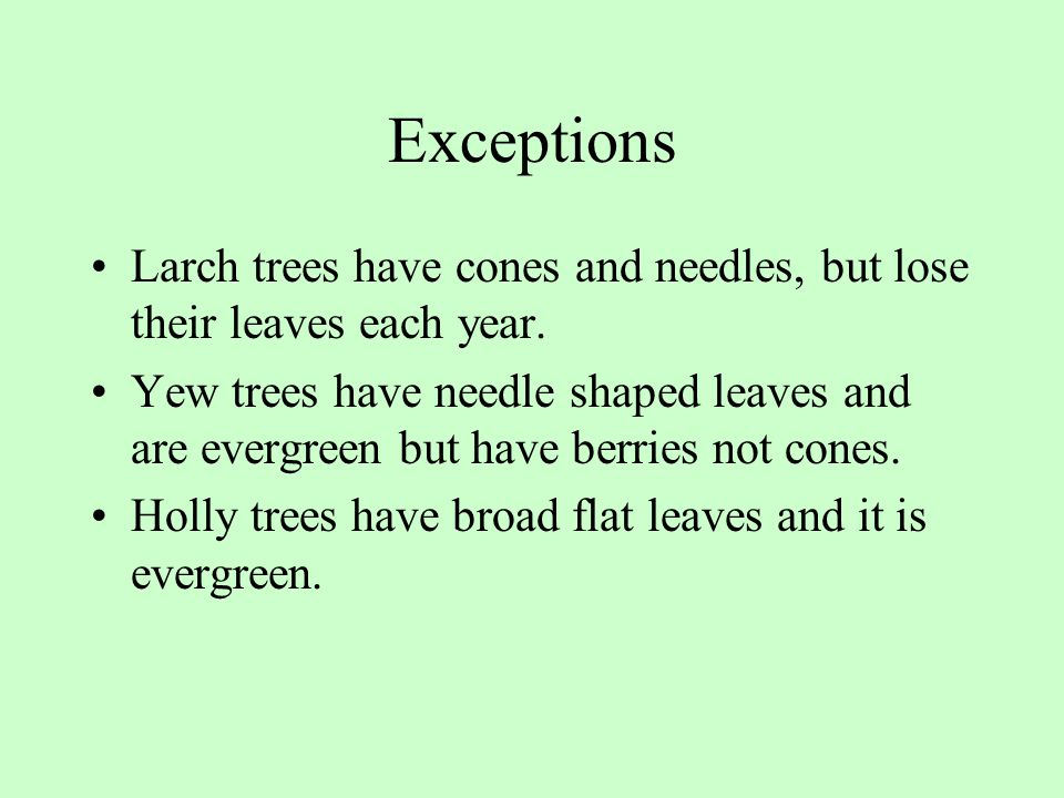 Exceptions Larch trees have cones and needles, but lose their leaves each year.