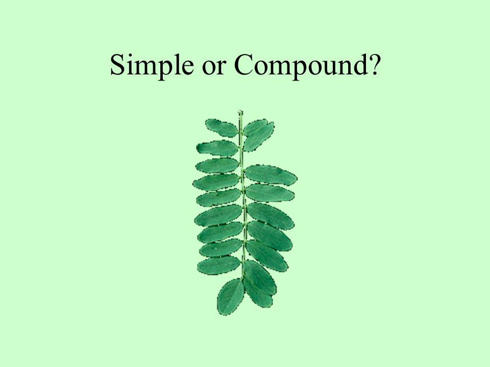Simple or Compound