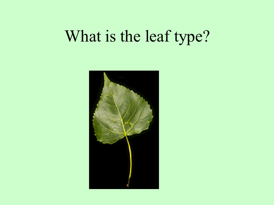 What is the leaf type