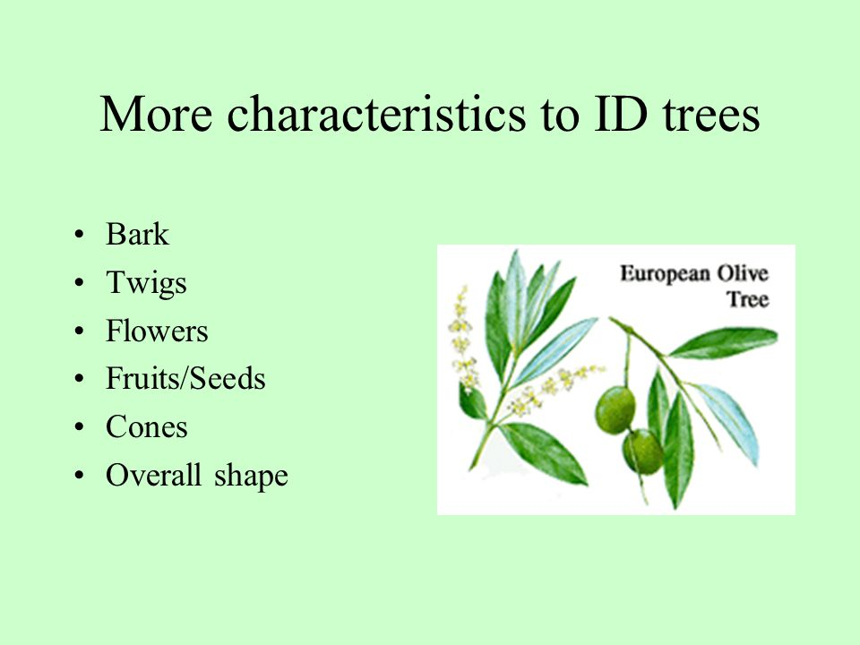 More characteristics to ID trees