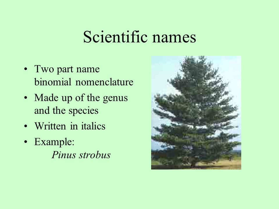 Scientific names Two part name binomial nomenclature