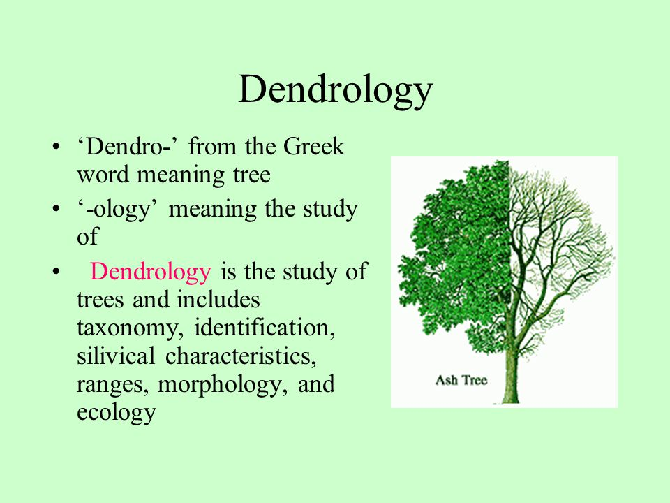 Dendrology 'Dendro-' from the Greek word meaning tree
