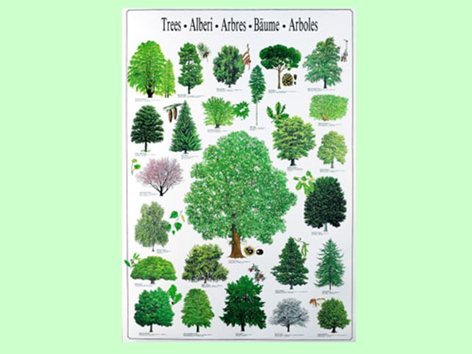 This poster is meant to represent the fact that many different trees in many different places exist in this world.