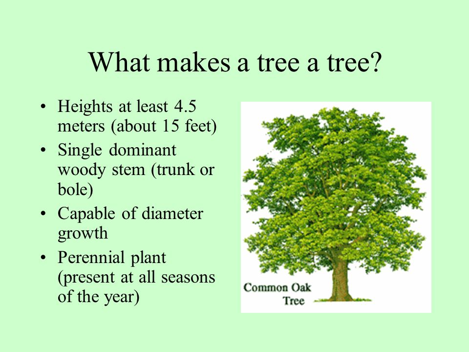What makes a tree a tree Heights at least 4.5 meters (about 15 feet)