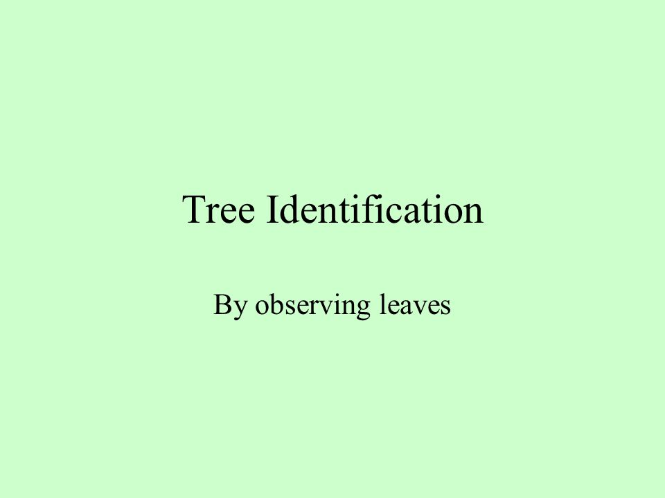 Tree Identification By observing leaves