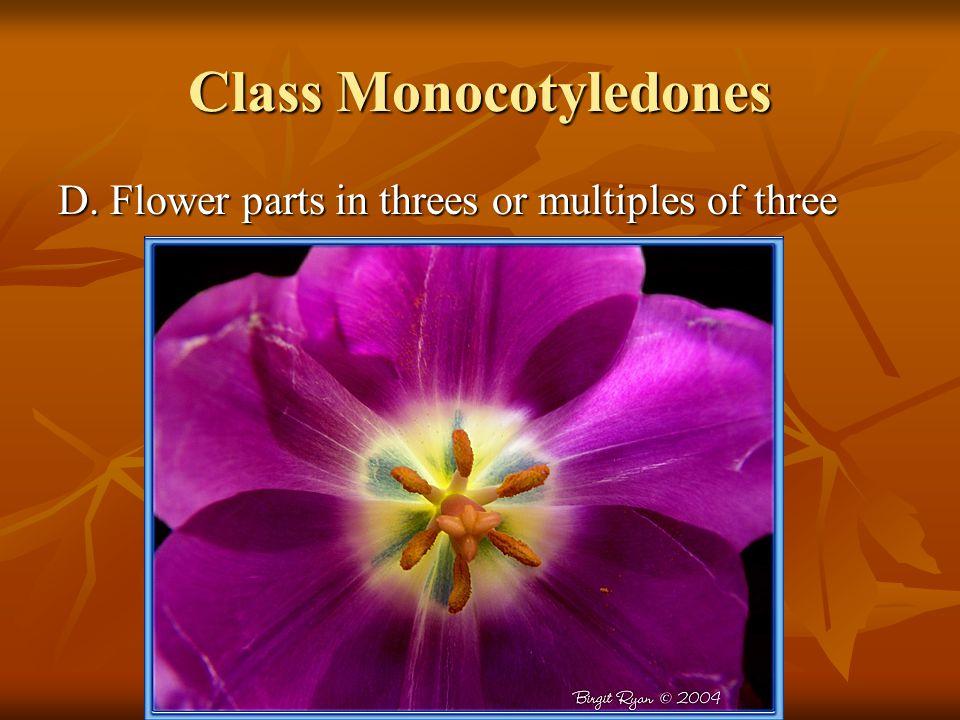 Class Monocotyledones