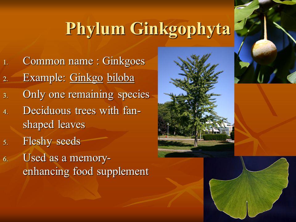 Phylum Ginkgophyta Common name : Ginkgoes Example: Ginkgo biloba