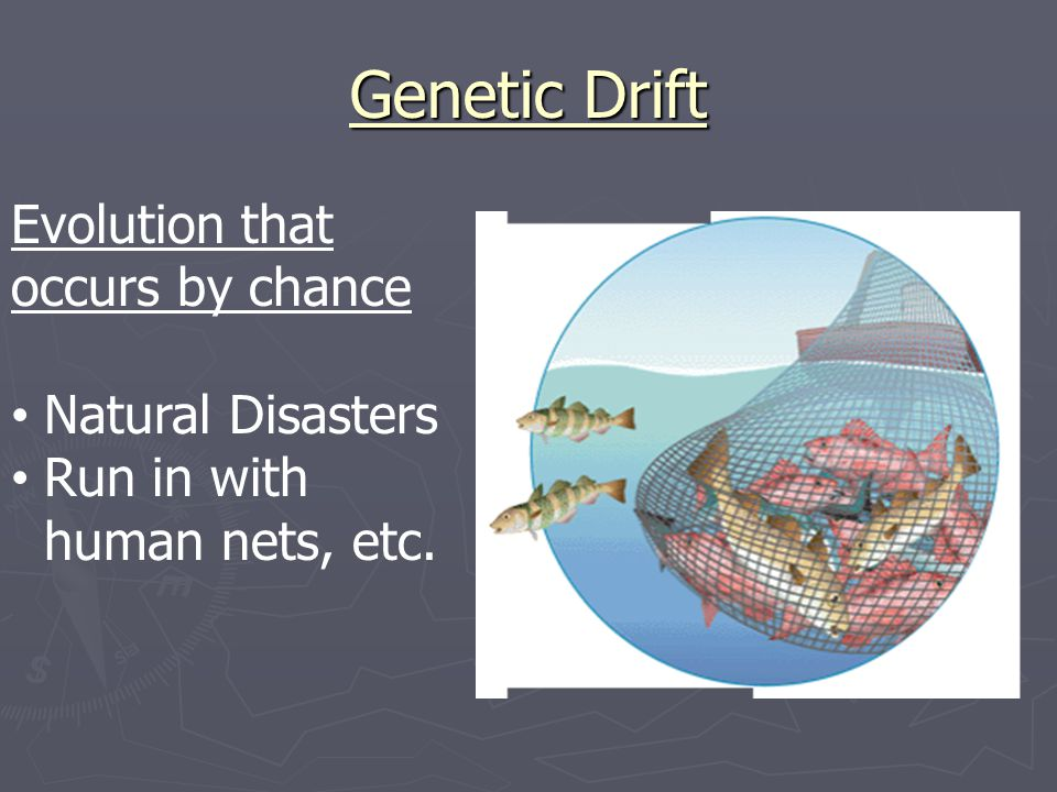 Genetic Drift Evolution that occurs by chance Natural Disasters