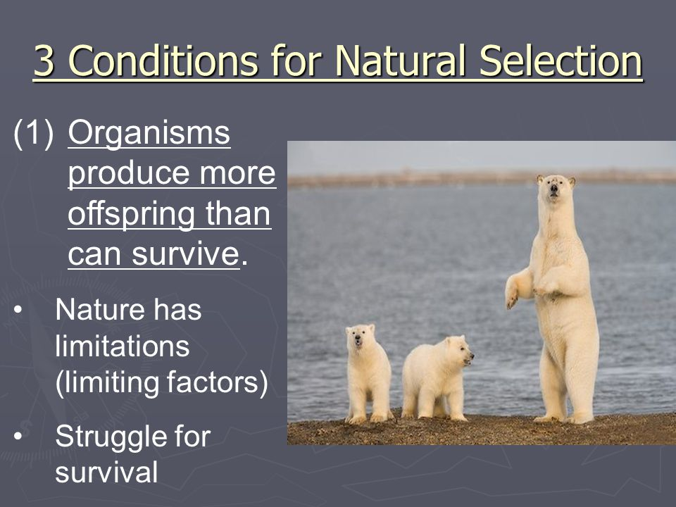 3 Conditions for Natural Selection