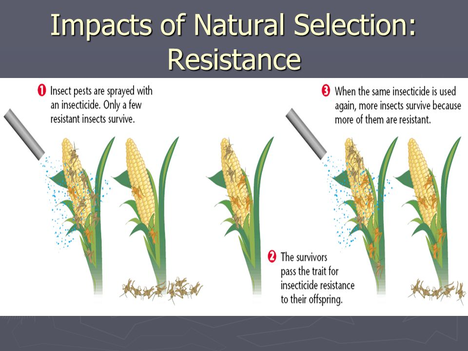 Impacts of Natural Selection: Resistance