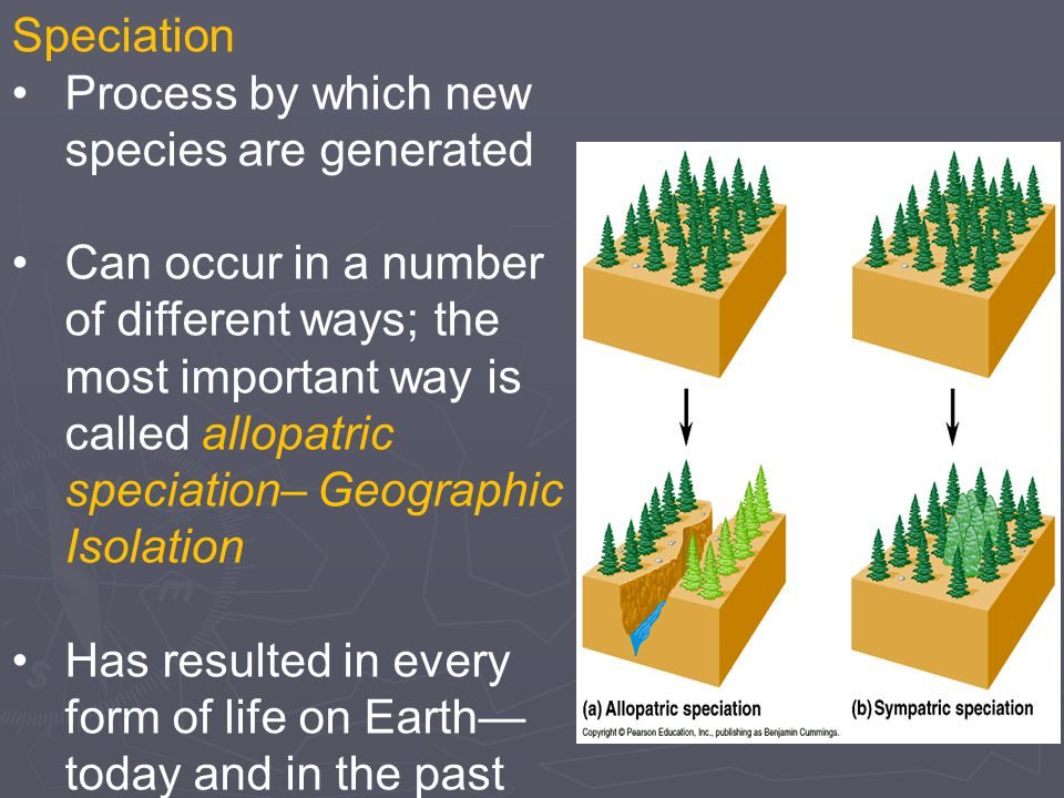 Speciation Process by which new species are generated.