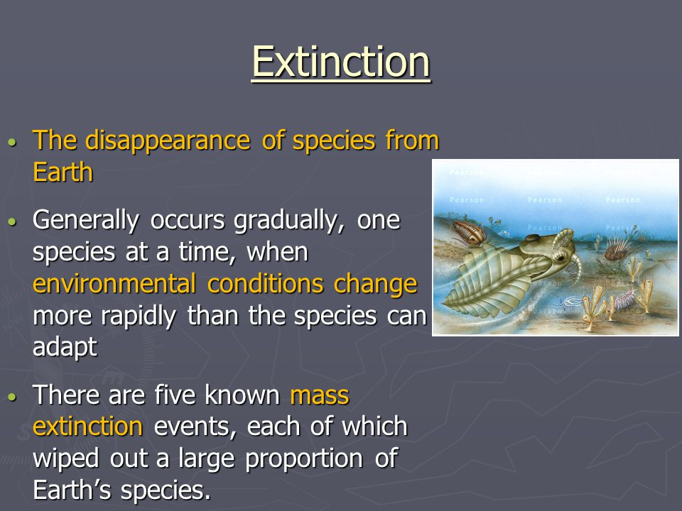 Extinction The disappearance of species from Earth