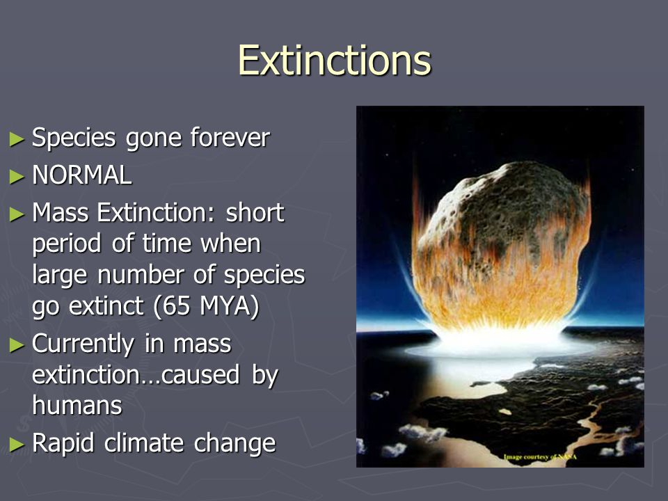 Extinctions Species gone forever NORMAL