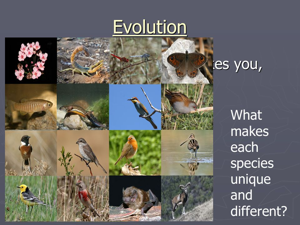 Evolution What makes you, YOU