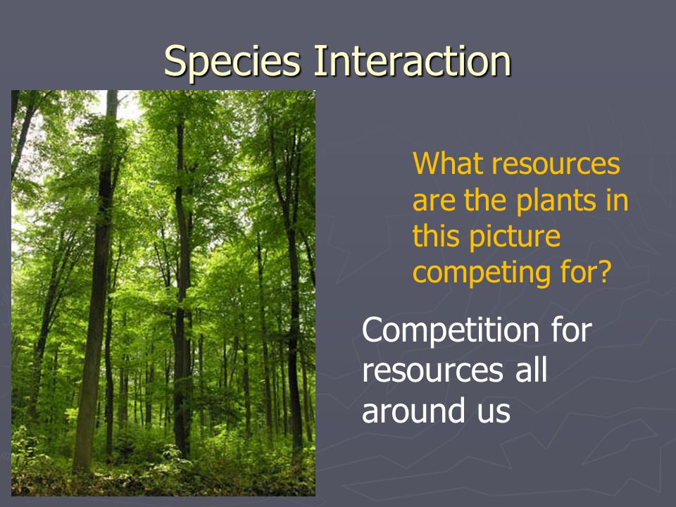Species Interaction Competition for resources all around us