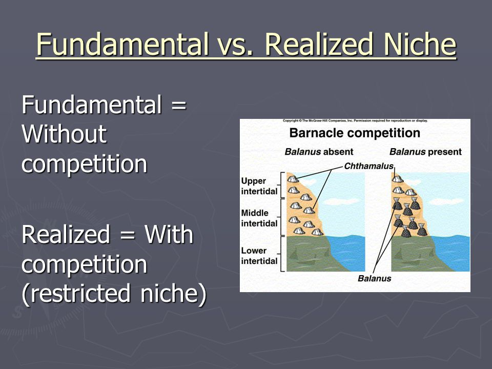 fundamental vs realized niches Realized niche vs fundamental niche sabrina and katie fundamental niche the full range of environmental conditions (potential area) and resources an organism can possibly occupy and use, especially when limiting factors are absent in its habitat.