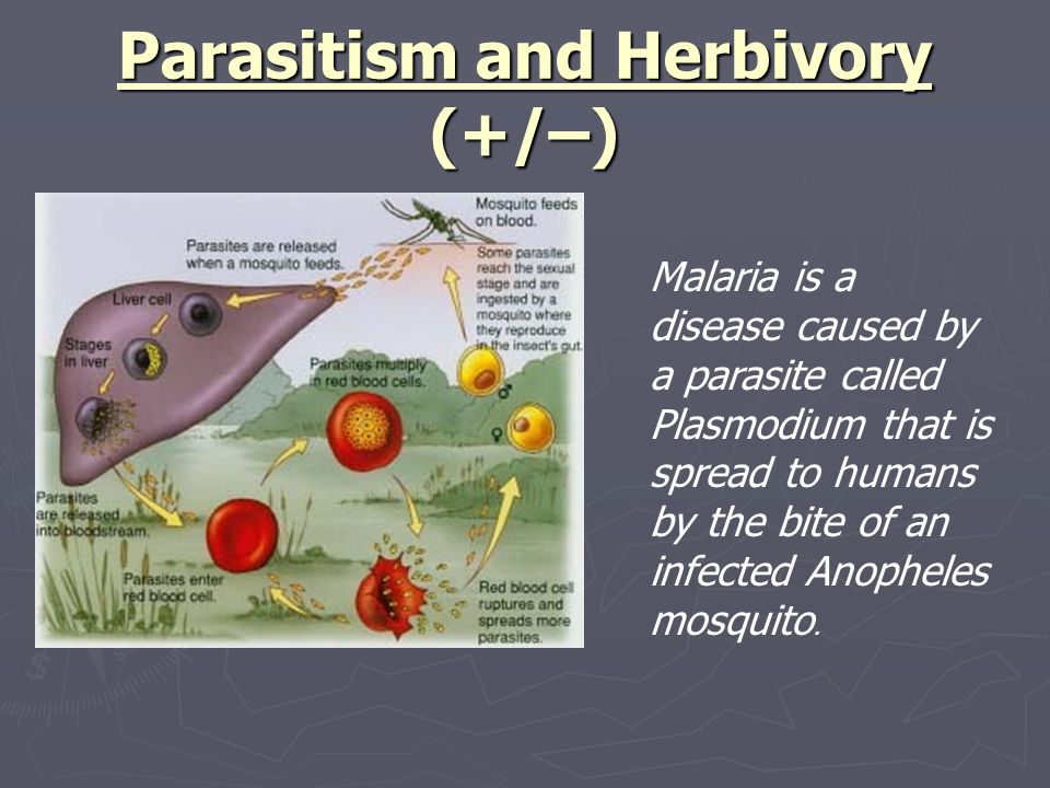 Parasitism and Herbivory (+/–)